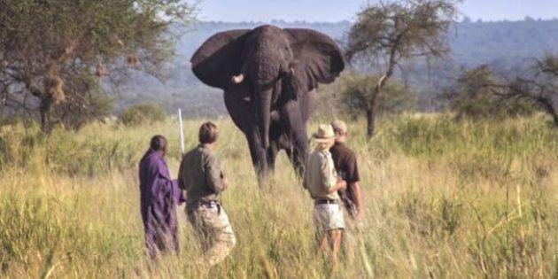 Parti chasser les éléphants en Tanzanie il y a 25 ans, j'y suis resté pour les