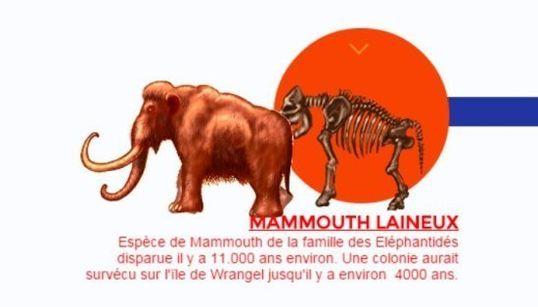 La science pourrait ressusciter des mammouths d'ici sept