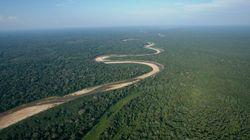 Savez-vous combien la forêt amazonienne compte