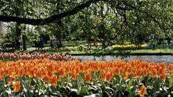 Les 10 plus beaux jardins du