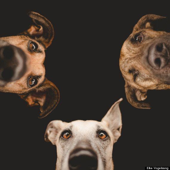 PHOTOS. Les chiens comme vous ne les avez jamais
