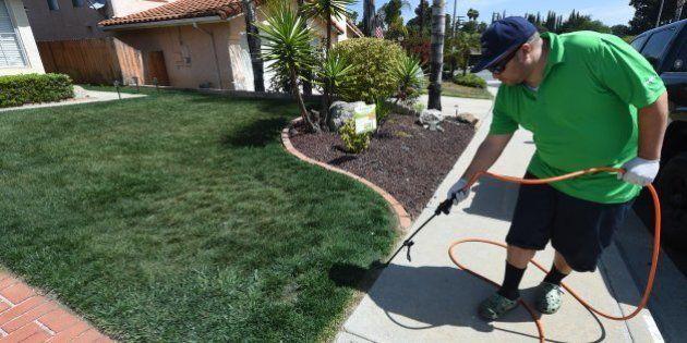 Peindre sa pelouse n'aura jamais rapporté autant