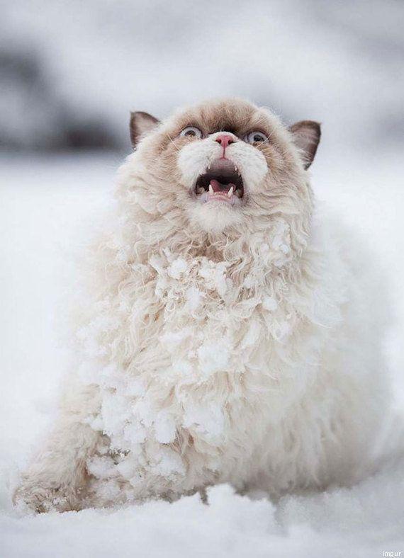 PHOTOS. Ce chat qui découvre la neige pour la première fois a bien fait rire les
