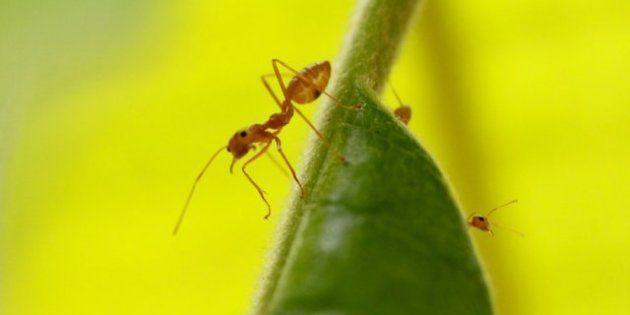 Les fourmis sont capables d'anticiper un tremblement de