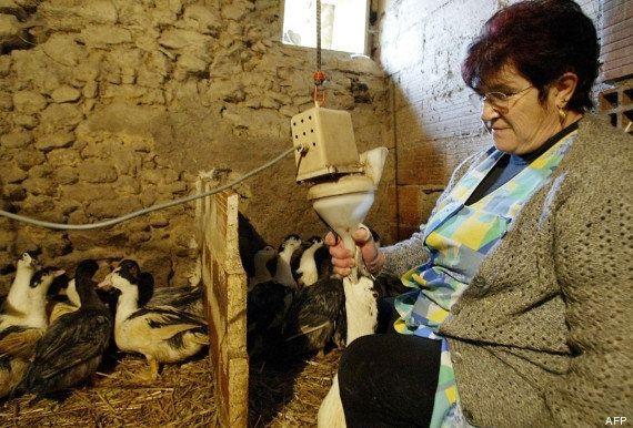 Foie gras et gavage : Près d'un Français sur deux favorable à l'interdiction de cette pratique sur les...