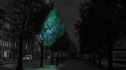 Bientôt des arbres lumineux pour remplacer les