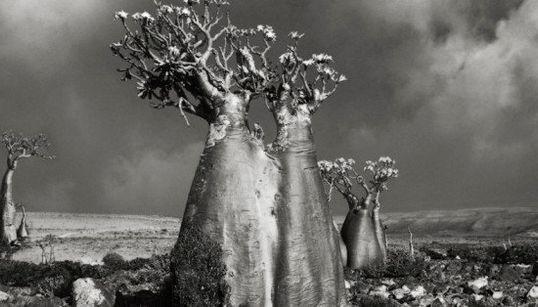 De majestueux portraits d'arbres
