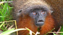 Des centaines de nouvelles espèces découvertes dans la forêt
