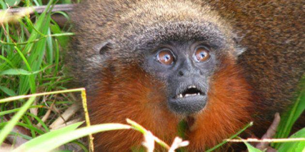 PHOTOS. Des centaines de nouvelles espèces découvertes dans la forêt