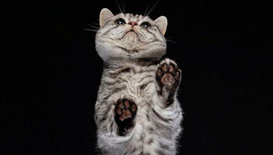 Ces photos de chats vus du dessous vont vous faire