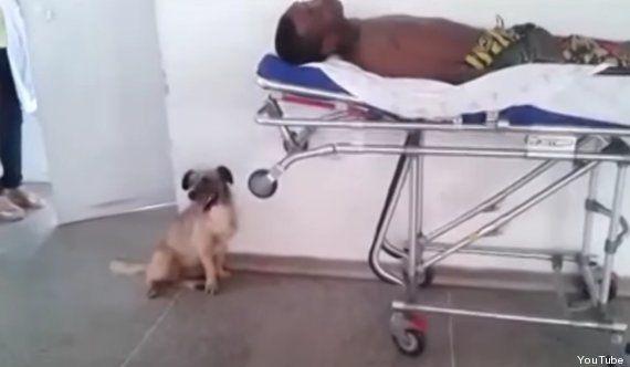 VIDÉO. Ce petit chien de sans-abri suit sans relâche l'ambulance qui transporte son maître à