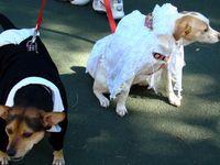 site rencontre proprietaire chien rencontre fille libanaise