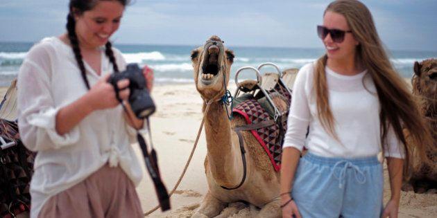 PHOTOS. Ce chameau qui bâille a bien fait rire les