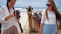 Ce chameau a bien fait rire les