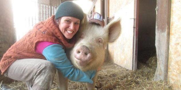 Dans le Piémont, la Petite ferme des animaux accueille des cochons rescapés des