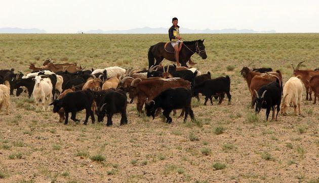 L'imagerie satellite au secours des éleveurs