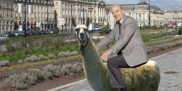 Serge le Lama: après sa virée dans le tram de Bordeaux, il devient une star du