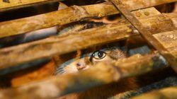 1000 chats chinois sauvés puis relâchés en pleine
