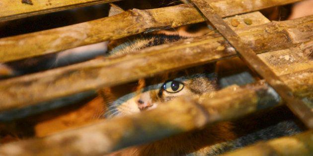 En Chine, mille chats relâchés en pleine forêt par les