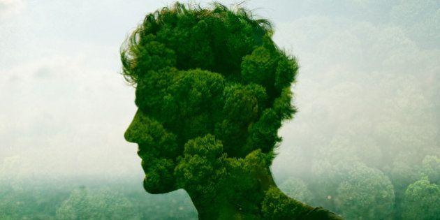 2015, année de l'écologie ou plutôt année de la