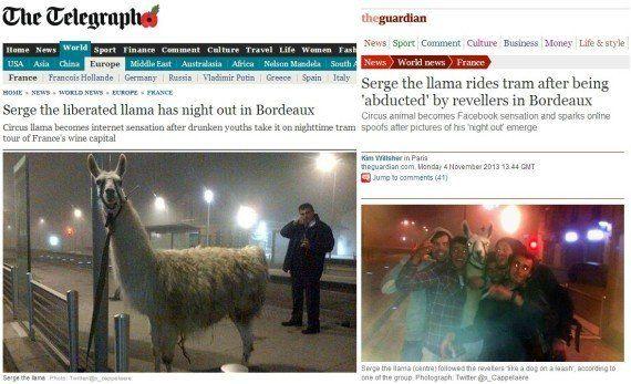 Serge, le lama devenu star