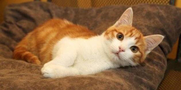 Facebook : le chaton torturé à Marseille s'en tire avec deux