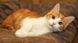 Oscar, le chaton torturé à Marseille, s'en sort avec deux