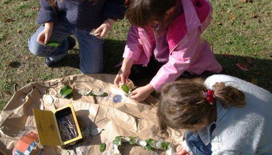 Le land art, l'activité que vos enfants vont