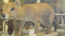 Une espèce qu'on croyait disparue depuis 30 ans aurait