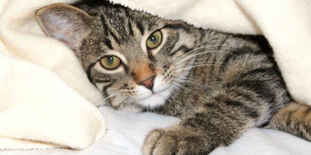 Un chat sauve la vie d'un bébé en le protégeant du froid en