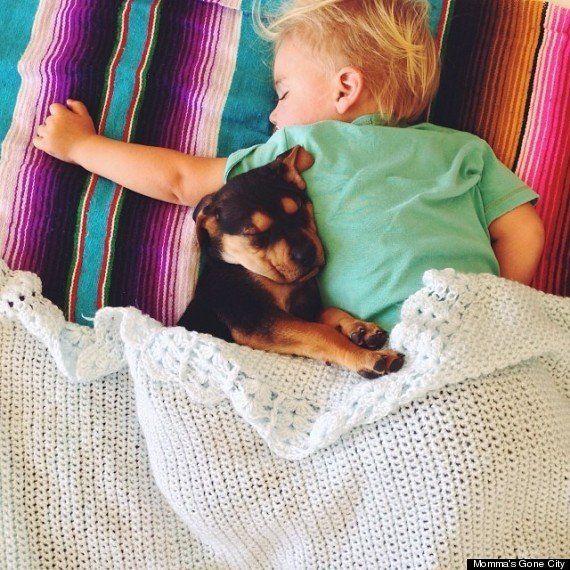 Theo (le chiot) et Beau (l'enfant), les deux stars d'une belle histoire de siestes