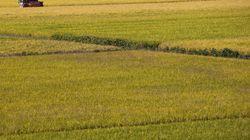 L'Europe des céréales, un point d'équilibre dans un monde sans