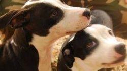 Ce chien aveugle et son frère peuvent remercier les réseaux