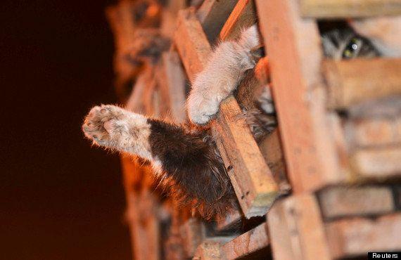 PHOTOS. Chine: 1000 chats entassés dans un camion sont sauvés après un accident de la