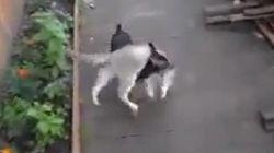 Le chien qui rapporte un