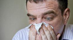 Alors, allergiques au bouleau