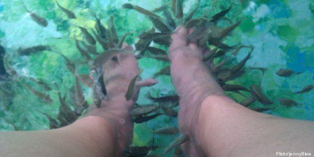 Fish pédicure : des risques d'infection, selon l'Agence de sécurité