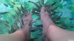 La fish pédicure présente des risques