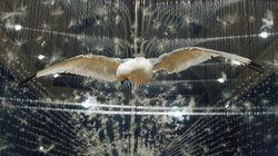 Les 10 artistes contemporains qui ont marqué l'année 2012 en
