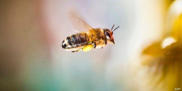 Les abeilles sauvées des insecticides par une décision de l'Union