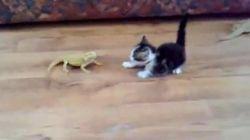 Le chat qui avait une peur bleue des
