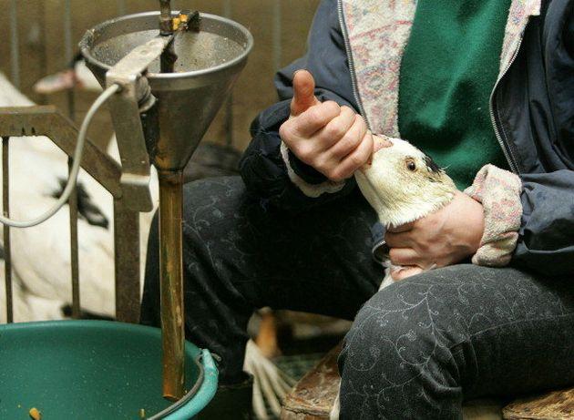 La production et la vente de foie gras sont désormais prohibées en