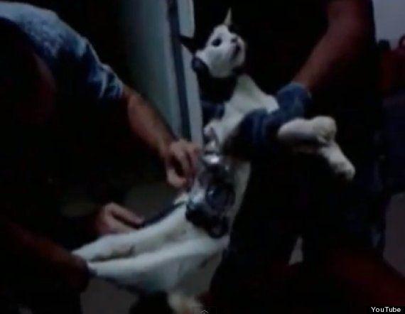 VIDEO. Un chat