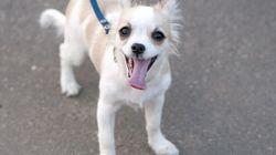 Un chien meurt électrocuté en marchant sur une plaque d'égout à