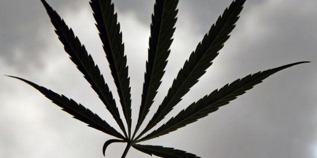 Vincent Peillon en faveur de la dépénalisation du cannabis, Jean-Marc Ayrault le