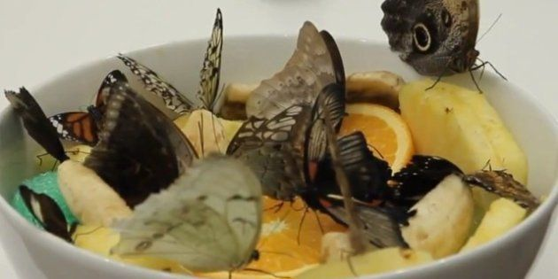 VIDÉO. Damien Hirst critiqué pour avoir tué près de 9000 papillons lors d'une exposition à la Tate