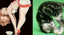 Des chats ou des