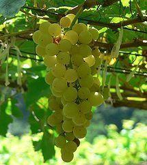 Tarte aux champignons et chèvre frais - le vin qui va bien