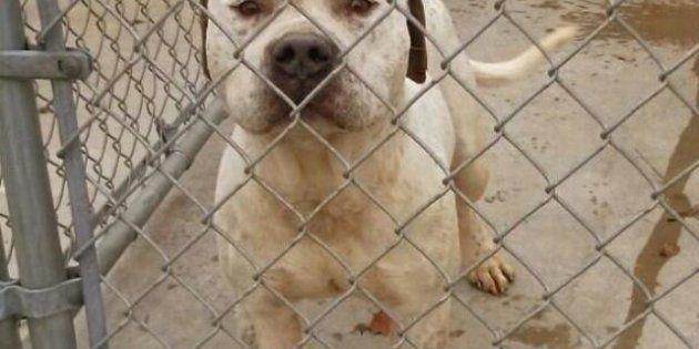 VIDÉOS. États-Unis: le propriétaire d'un chien veut l'euthanasier parce qu'il le croit