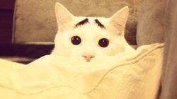 Sam, le chat avec des